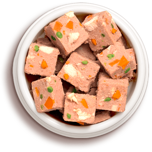 a bowl of freshpet dog food