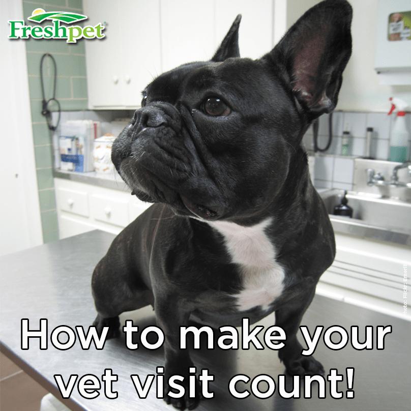 Blog - Make Your Vet Visit Count