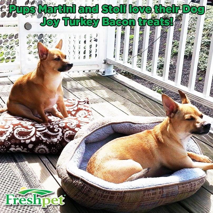 Martini and Stoli Pups