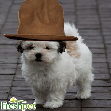 Puppy Twitter 1