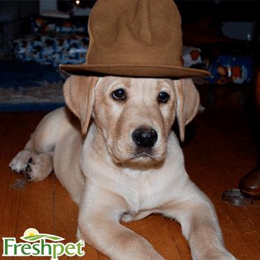 Puppy Twitter 3