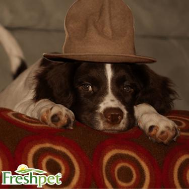 Puppy Twitter 4