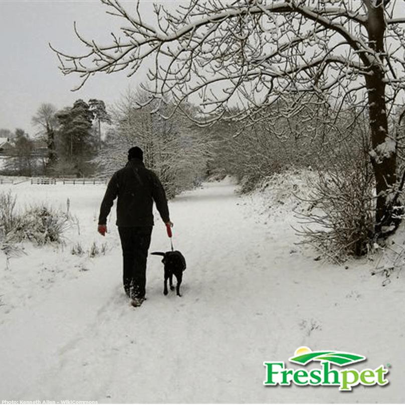 Walking Dog in Snow