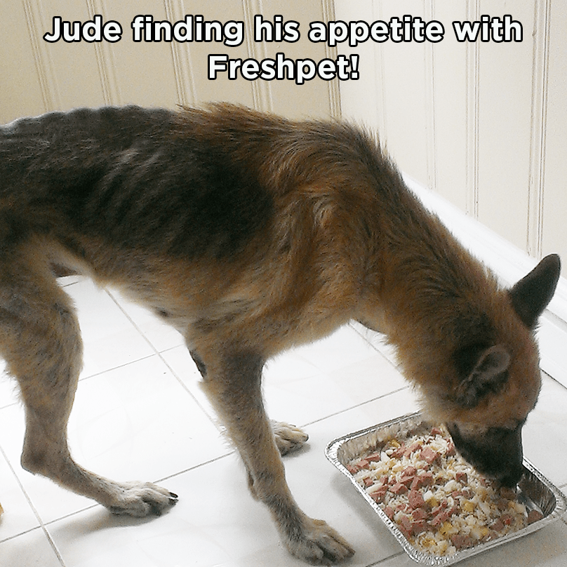 Jude - Eating FP