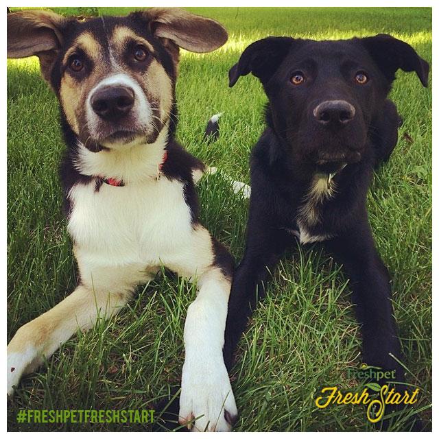 S_FreshStart_Pups_140801