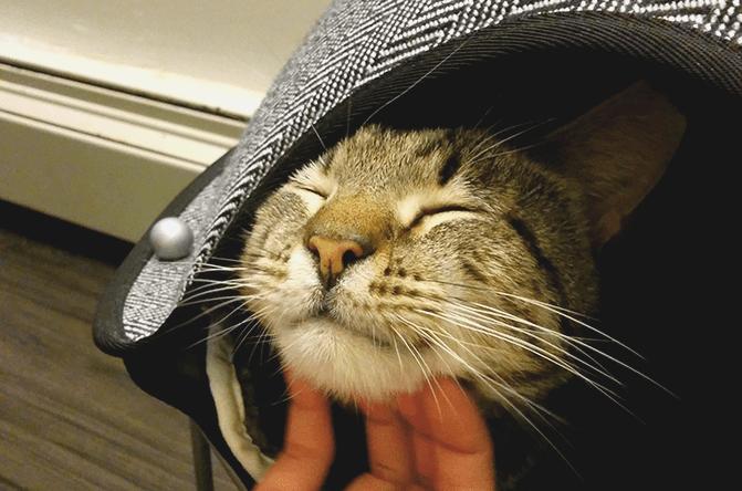 MeowParlour_01