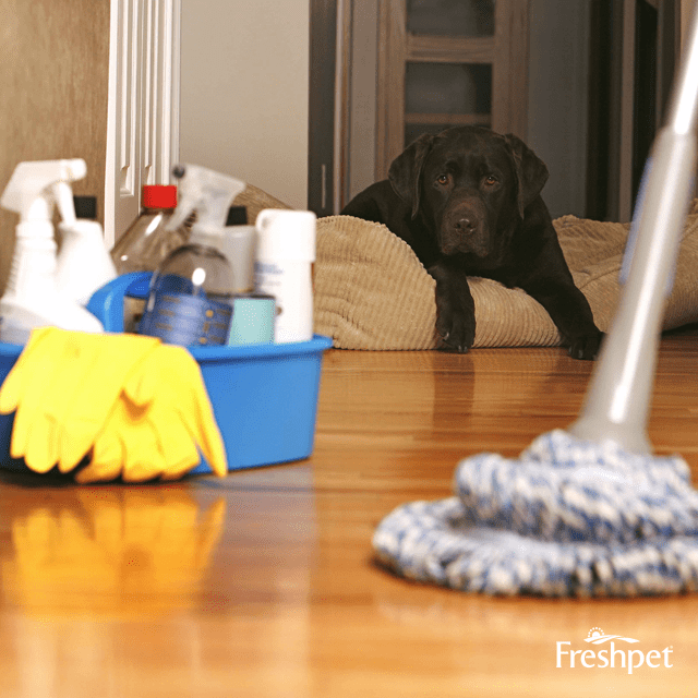3 Pet-Friendly Brands for Spring Cleaning - Freshpet