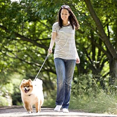 stripes-walking-dog-400x400