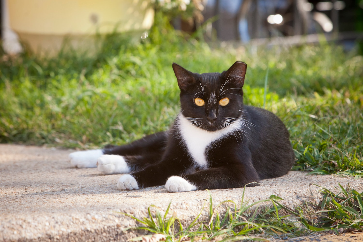 Free-roaming_cats_that_have_already_been_spayed_or_neute-1