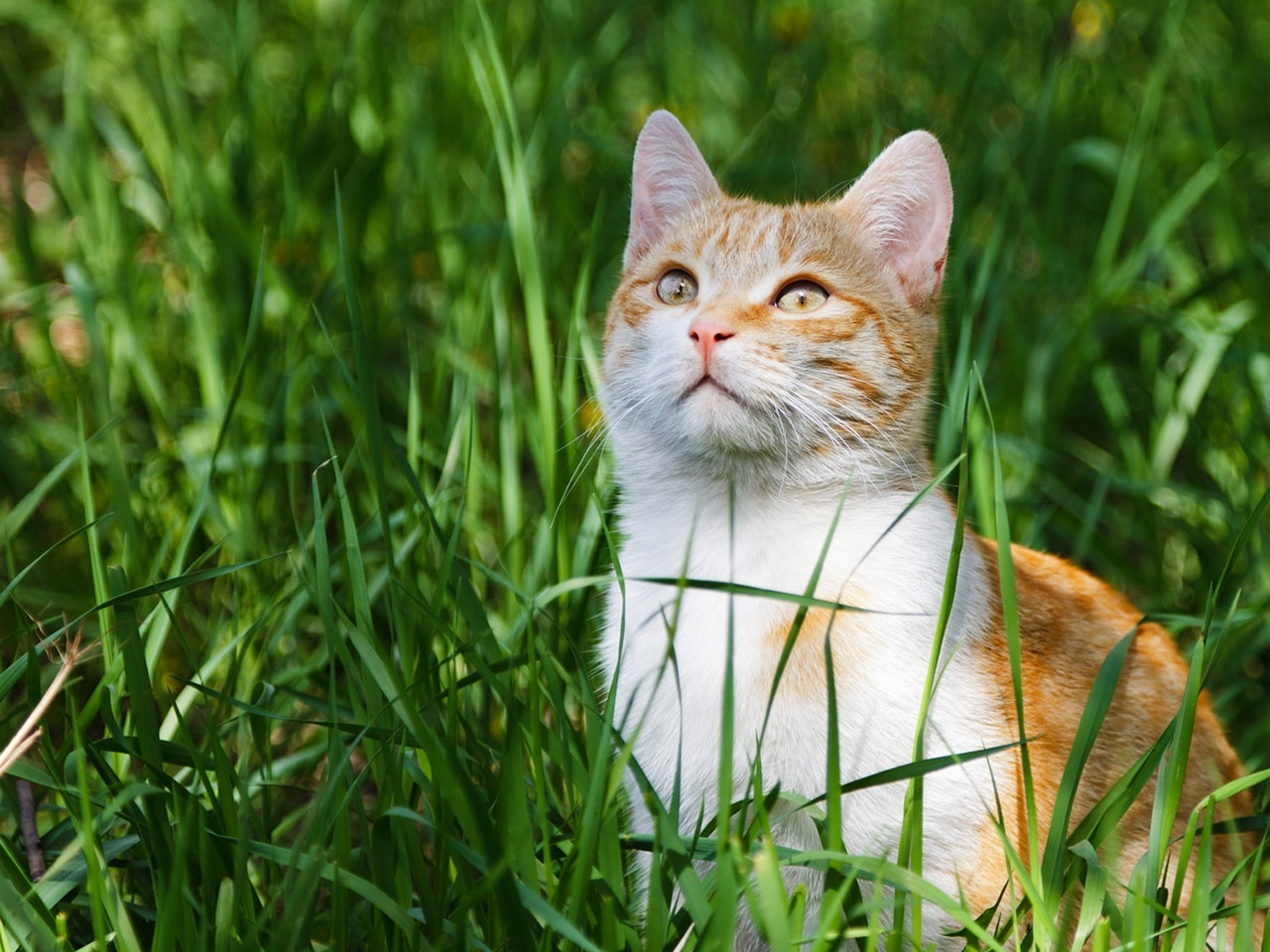 Young kitten in grass outdor shot at sunny day