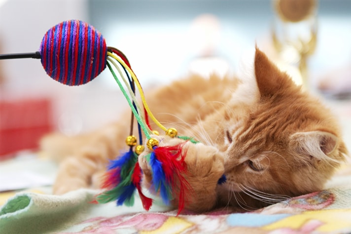 play_cat_147243300_dentharg_iStock_Thinkstock