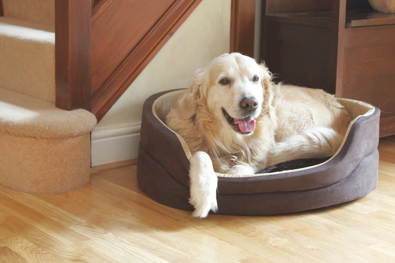ancol-sleepy-paws-dog-bed-timberwolf-faux-suede-oval-60cm_product_1_713_large