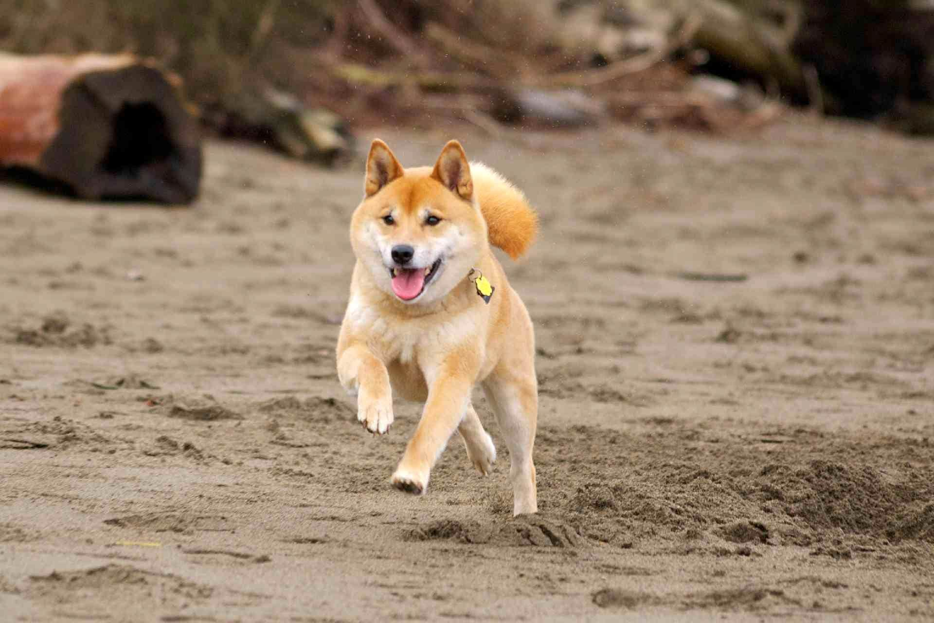 a-cute-dog-runningcute-running-dog-hd-wallpapers-in-1-photo-gallery-ts9u43hm