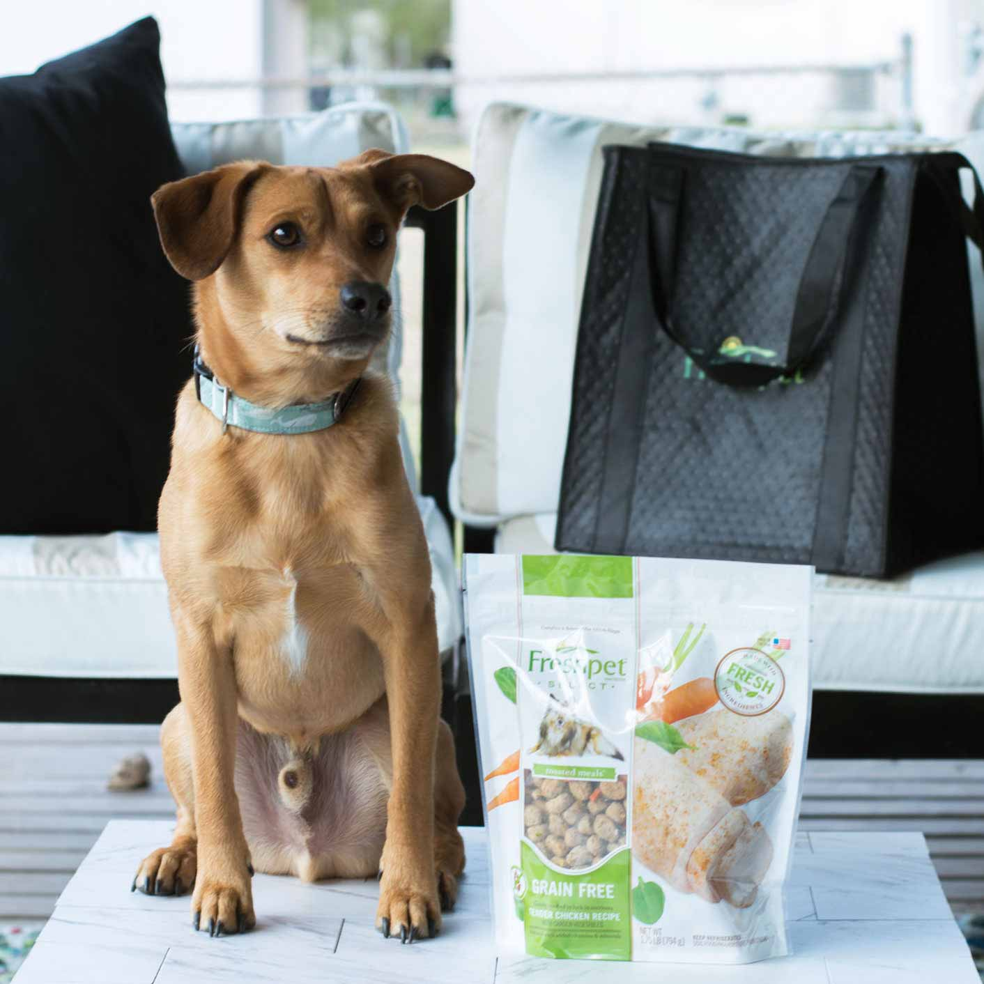 Try The Benefits Of Fresh All Natural Pet Food Freshpet