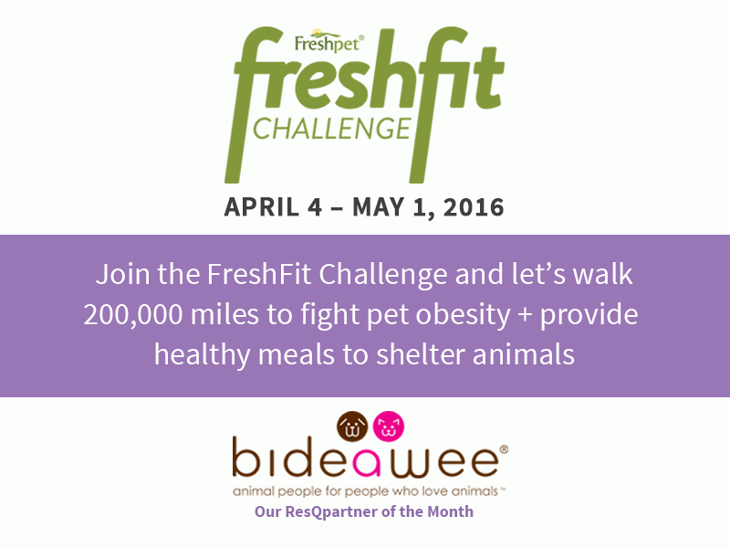 ChallengeIntroduction_FreshFitREV