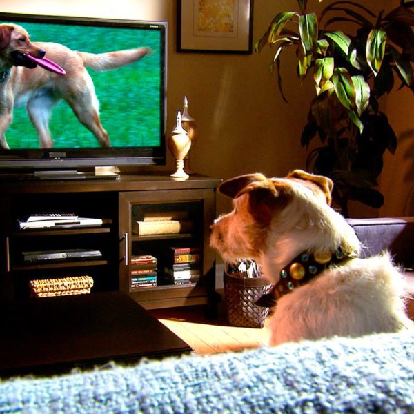 Don 39 t miss these pet documentaries on netflix freshpet - The lion in the living room netflix ...