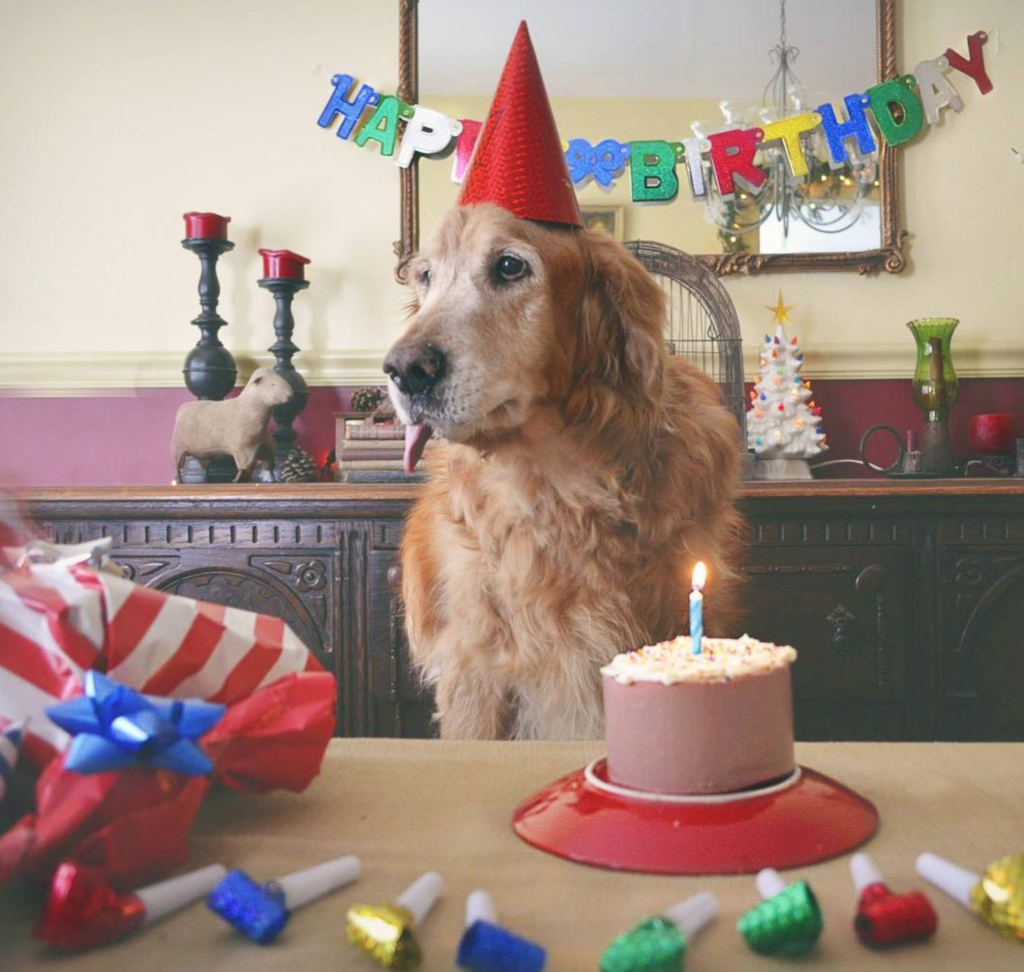 Puppy Party How To Throw A Birthday Bash For Your Dog