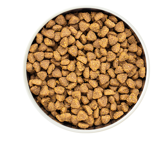 dry pet food in a bowl