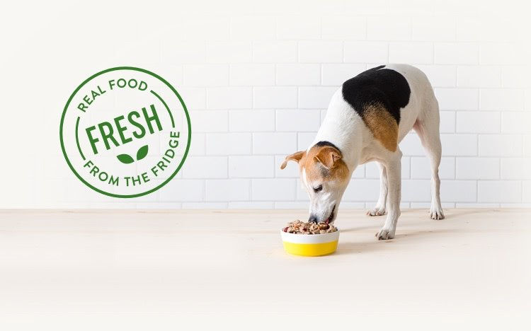 dog white with black and brown spots eating freshpet from a white and yellow bowl, real food from the fridge logo to the left of the dog