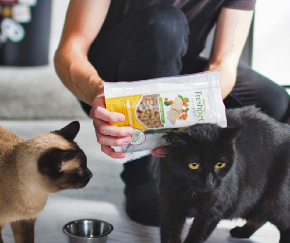 a man is feeding freshpet select to a Siamese and black cat